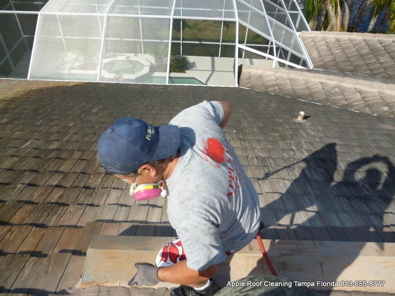 Tile Roof Cleaning Cory Lake Isles Tile Roof Cleaning