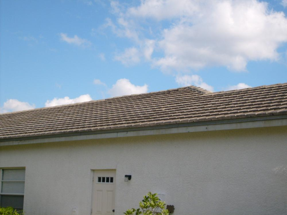 Tampa Non Pressure Roof Cleaning 024.jpg